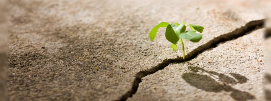 Crear una nueva vida | Universo ThetaHealing