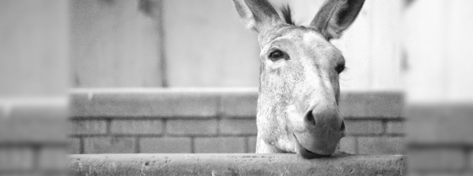 El burro y el pozo | Universo ThetaHealing